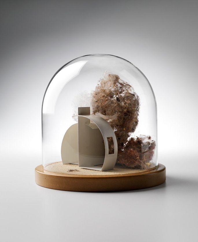 Secret Life of Domestic Dust - Nissan Hut Moss